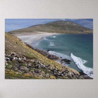 Falkland Islands, West Falkland, Saunders Poster