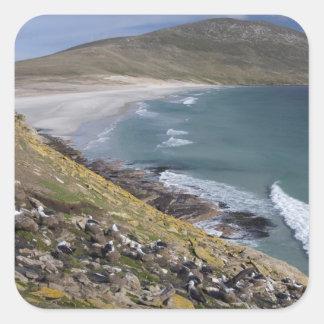 Falkland Islands, West Falkland, Saunders Square Sticker