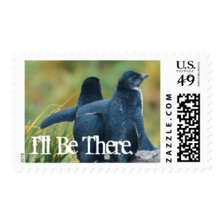 Falkland Islands. West Point Island 1 Postage Stamp