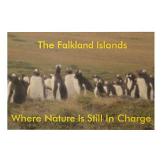 Falkland Wall Board Wood Print