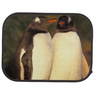 Falklands Islands. Gentoo Penguins.  (Pyroscelis Car Floor Mat