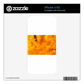 Fall abstract skin for the iPhone 4