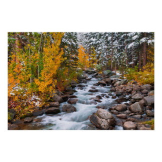 Fall along Bishop creek, California Poster