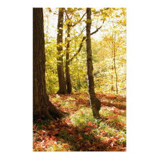Fall and Forest Trees Stationery