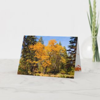 Fall and Thanksgiving Card card