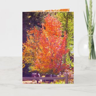 Fall and Thanksgiving Card 2 card