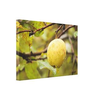 Fall Apple Canvas Print