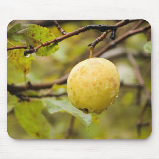 Fall Apple Mouse Pads