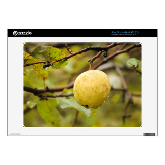 Fall Apple Skins For Acer Chromebook