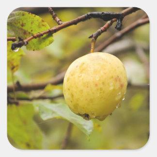 Fall Apple Sticker