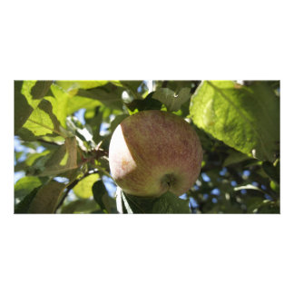 Fall Apples Photo Greeting Card