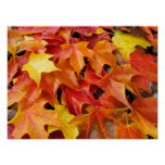 Fall Art prints Colorful bright Autumn Leaves Poster