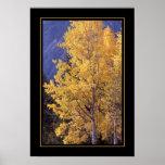 Fall aspen tree bordered poster print
