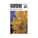 Fall aspen tree postage stamps