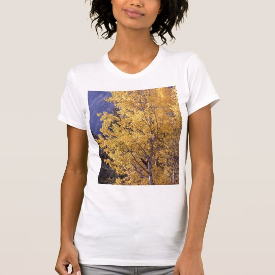 Fall aspen tree womens t-shirt
