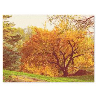 "Fall Autumn Landscape Photo of Central Park 17"" X 23"" Tissue Paper"