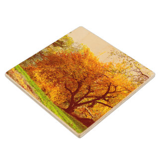 Fall Autumn Landscape Photo of Central Park Wood Coaster