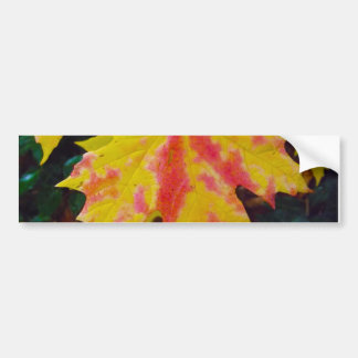 Fall Autumn Maple Leaf Bumper Sticker