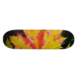 Fall Autumn Maple Leaf Skateboard Deck