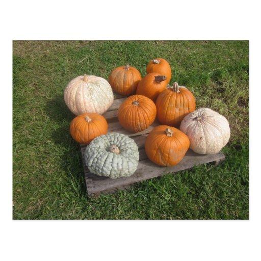 Fall Autumn Pumpkin Patch Postcard
