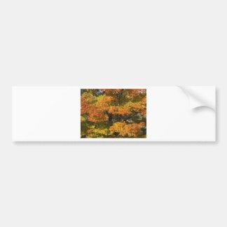 Fall Autumn Scenes Trees Leaves Bumper Sticker