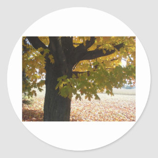 Fall Autumn Scenes Trees Leaves Classic Round Sticker