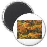 Fall Autumn Scenes Trees Leaves Fridge Magnets