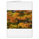 Fall Autumn Scenes Trees Leaves Greeting Card