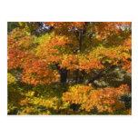 Fall Autumn Scenes Trees Leaves Post Card