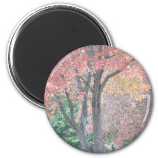 Fall Beauty 2 Inch Round Magnet