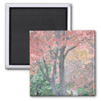 Fall Beauty 2 Inch Square Magnet