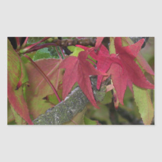 Fall Begins - Maple Leaves are Turning Red Rectangular Sticker