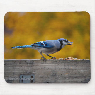 Fall Blue Jay Mouse Pad