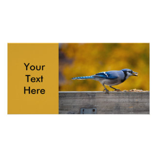 Fall Blue Jay Picture Card