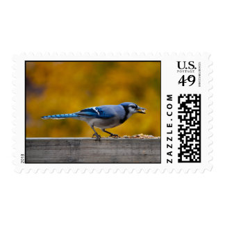 Fall Blue Jay Stamps