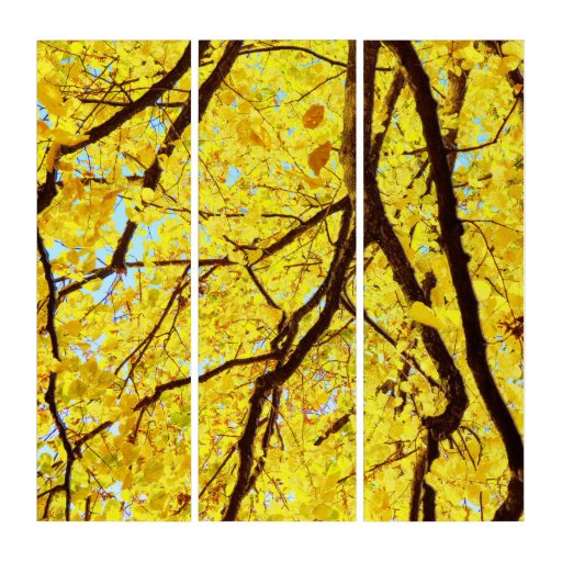 Fall branches - golden yellow triptych