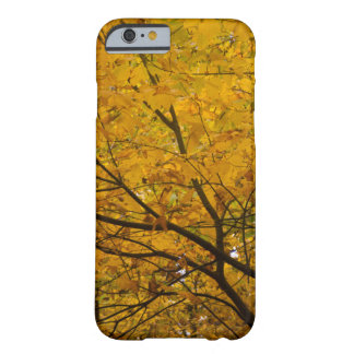 Fall Canopy Barely There iPhone 6 Case