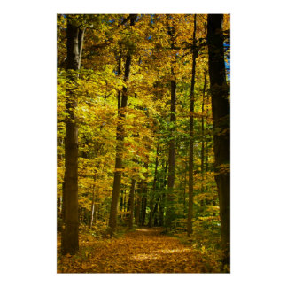 Fall Canopy on the Bridal Path Poster