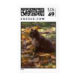 Fall Cat Stamp