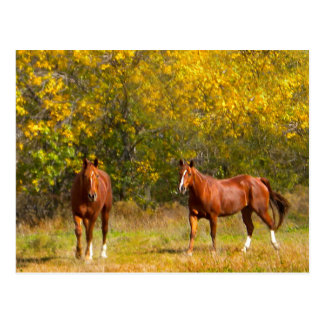 Fall Chestnut Horses Postcard
