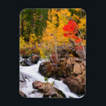 "Fall color along Bishop Creek, CA Magnet<br><div class=""desc"">Fall color along Bishop Creek,  Inyo National Forest,  Sierra Nevada Mountains,  California,  Usa 