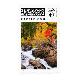 Fall color along Bishop Creek, CA Postage