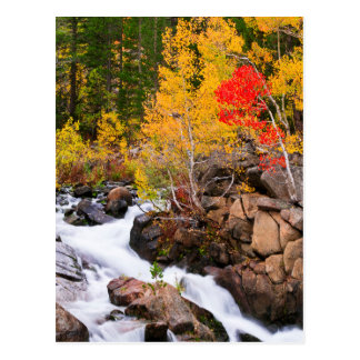 Fall color along Bishop Creek, CA Postcard
