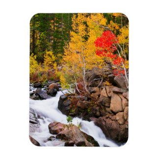 Fall color along Bishop Creek, CA Rectangular Photo Magnet