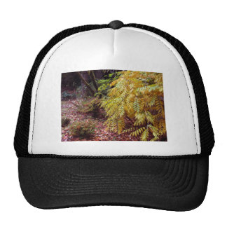 Fall Color in the Yashiro Japanese Garden Olympia Trucker Hat