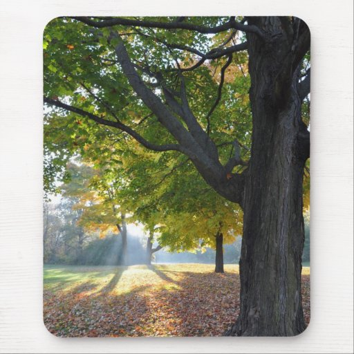 Fall Color Mouse Pad
