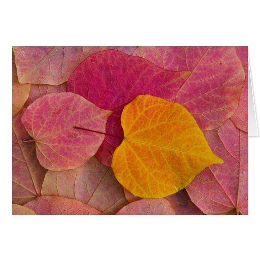 Fall color on Forest Pansy Redbud fallen Greeting Card