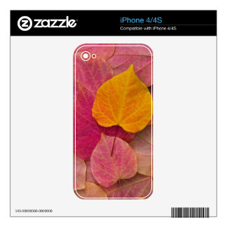Fall color on Forest Pansy Redbud fallen iPhone 4 Decal
