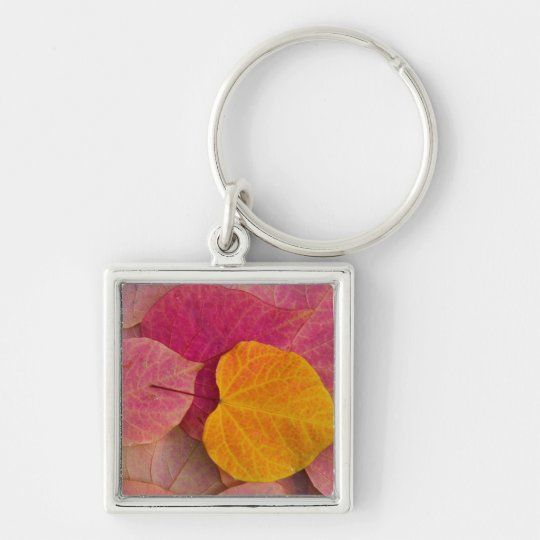 Fall color on Forest Pansy Redbud fallen Keychain