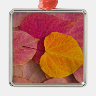 Fall color on Forest Pansy Redbud fallen Metal Ornament